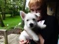 Puppy! Even furry friends love great design!